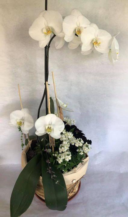 Bonne fête du travail 2019 pour tous. Feliz día del trabajo para todos. Voici notre composition de muguet, orchidées et ...
